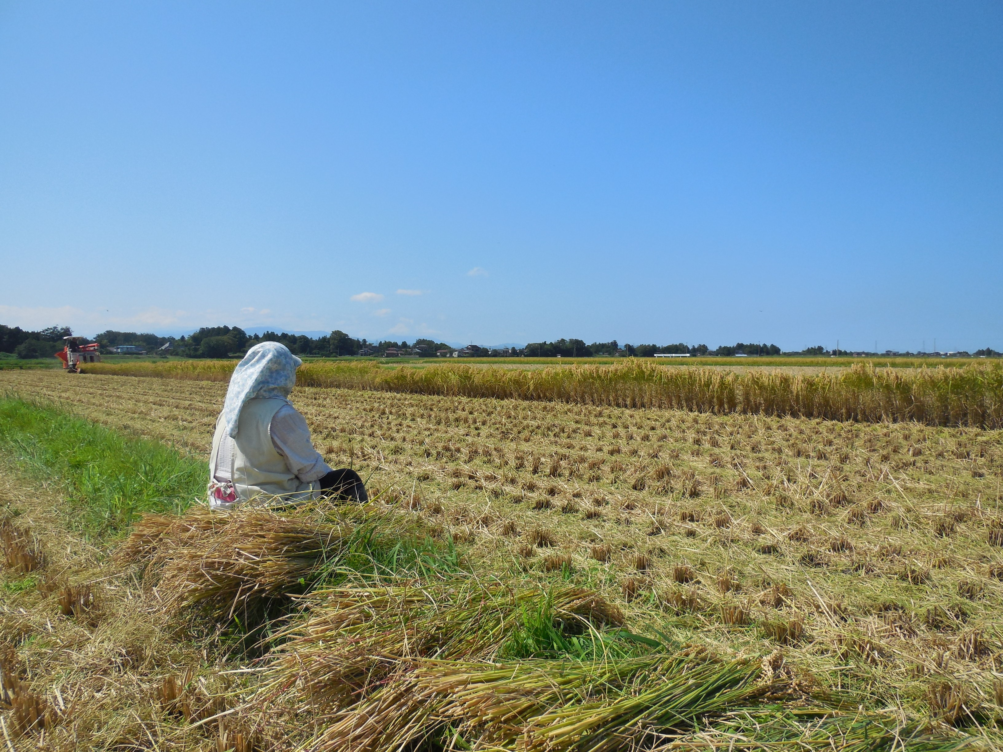 稲刈り風景1