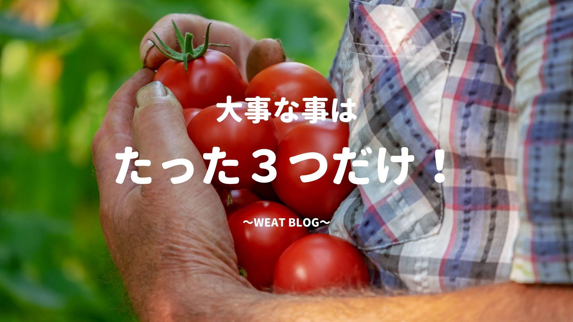 完全図解!無肥料栽培でトマトを定植する3つのポイント