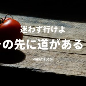 不器用な私でも出来た!トコトン解説、トマトの45度誘因