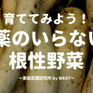 【実践中!】これなら出来る!?農薬を使わない野菜栽培